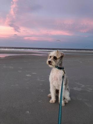 Pensive sunset look...